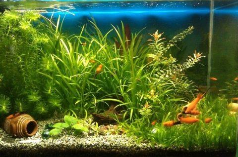 Фосфаты в аквариуме (15 фото): как понизить или повысить уровень фосфатов? как поднять или снизить содержание фосфатов в аквариуме-травнике? норма содержания и тест на количество