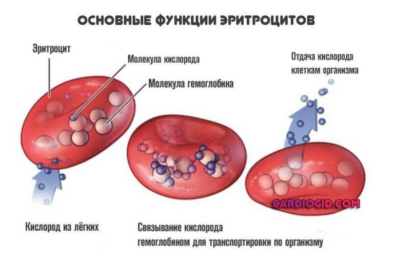 Что такое гемолиз крови? виды, нормы, причины, признаки и лечение