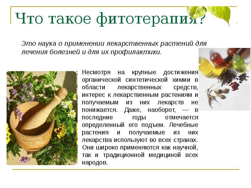 Сапонины. сапонины – полезные вещества растений механизм действия сапонинов - медицина для тебя