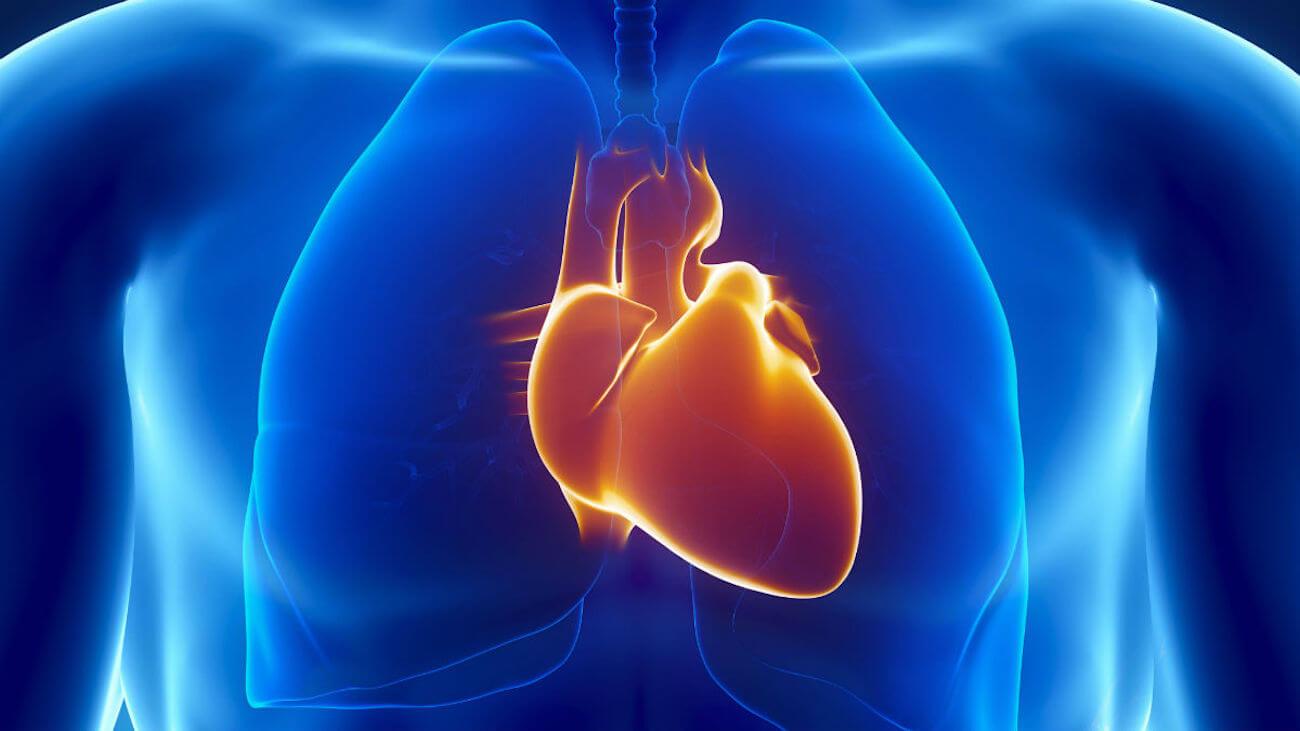 Непрямой массаж сердца. проведение непрямого массажа сердца (техника).