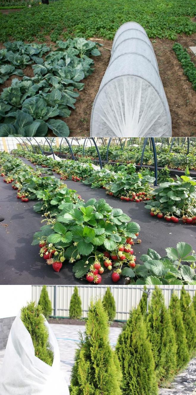 Спанбонд – как правильно выбрать и использовать агроволокно | дела огородные (огород.ru)