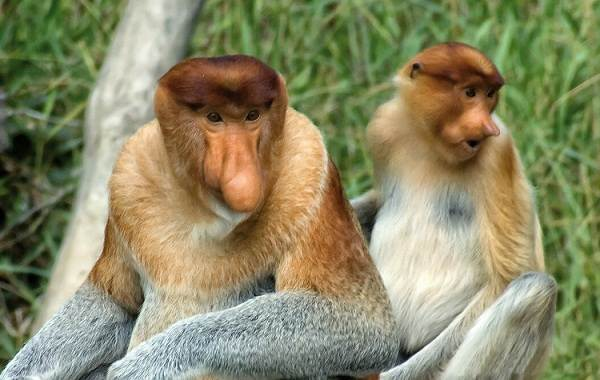Прекрасные фотографии самых красивых видов обезьян