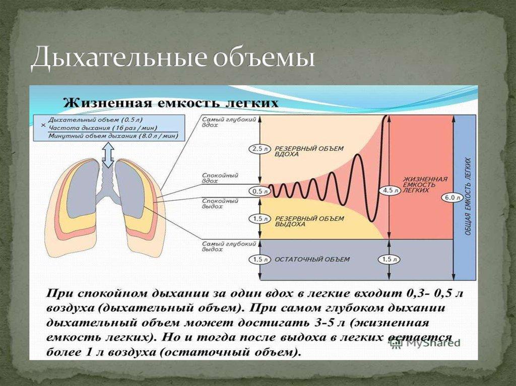 Жизненная емкость легких. гуморальная и нервная регуляция дыхания