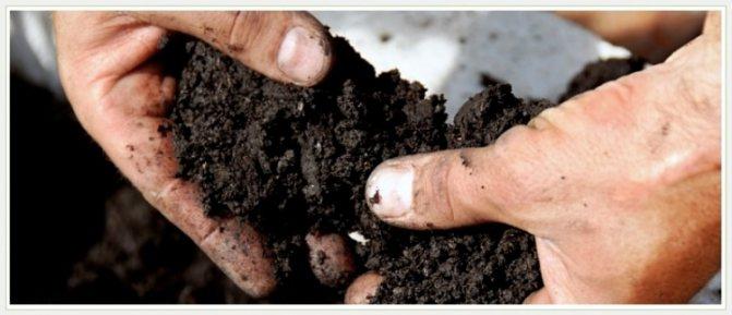 От чего зависит плодородие почвы?
