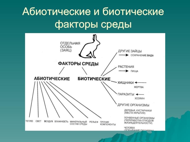 Биотические факторы окружающей среды | какие факторы относят к биотическим