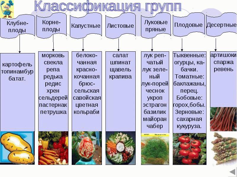 Помидор — это фрукт или овощ? | new-science.ru