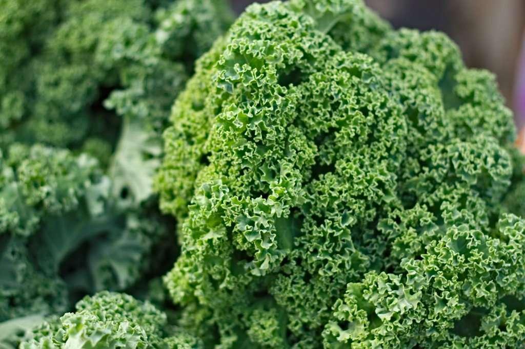 Что приготовить из капусты кейл (кале) и другой супер-зелени? | профилекторий