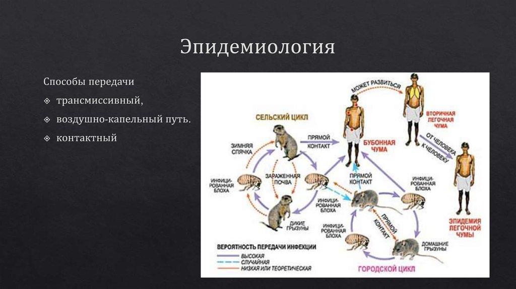 Хантавирус в россии! симптомы, диагностика, лечение
