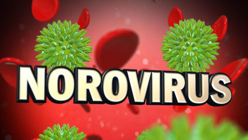 Норовирус – что это за инфекция, что такое норовирус и как он передается?