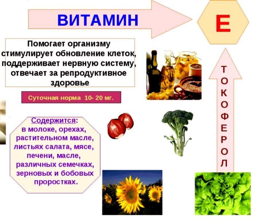 Что такое витамин к для чего он служит