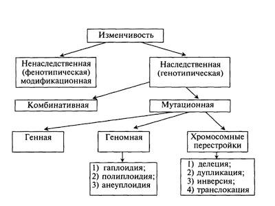 Мутагенные факторы и мутагенез