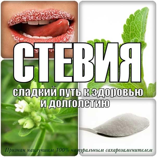 Сахар на пользу: что такое стевия, и как использовать ее в кулинарии? | кто?что?где?