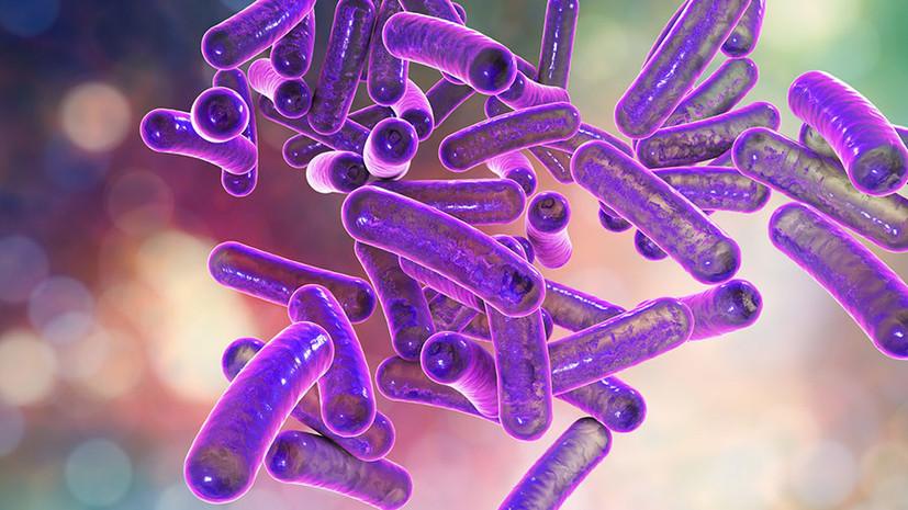 Микроорганизмы: строение и классификация