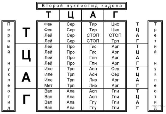 Anticodon описание, функции и различия с кодоном