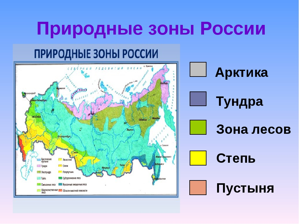 Какие бывают природные зоны, их основные особенности