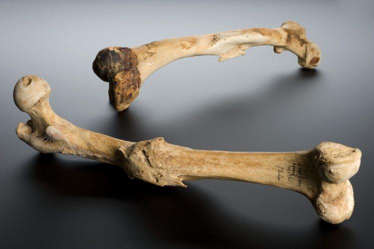 Кости (телесериал) — википедия. что такое кости (телесериал)