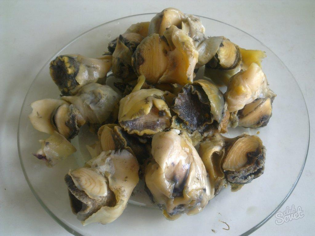 Рапаны - описание пользы и вреда с фото; приготовление мяса моллюска
