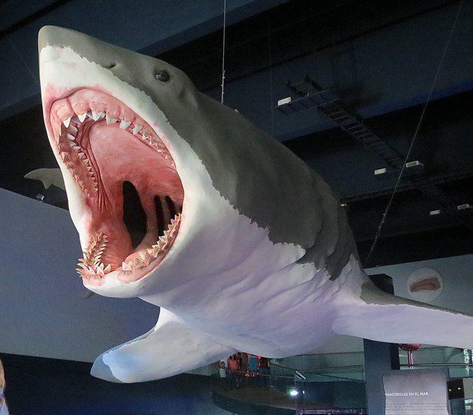 Мегалодон жив - новые факты ∞ лагуна акул