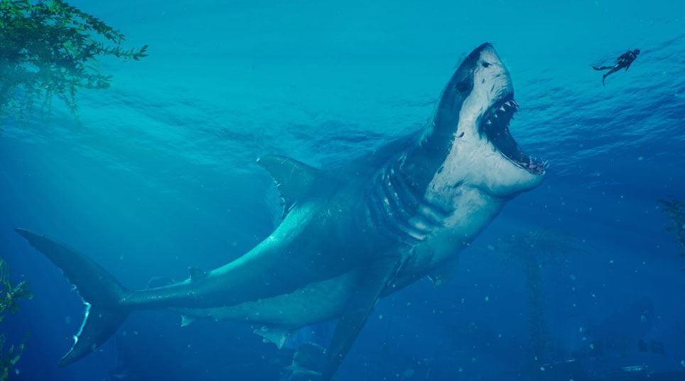 Мегалодон: самая большая акула в мире - как они вымерли?