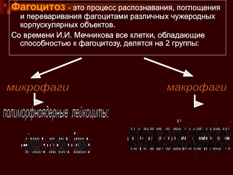 Понятие, механизм и последовательность осуществления фагоцитоза