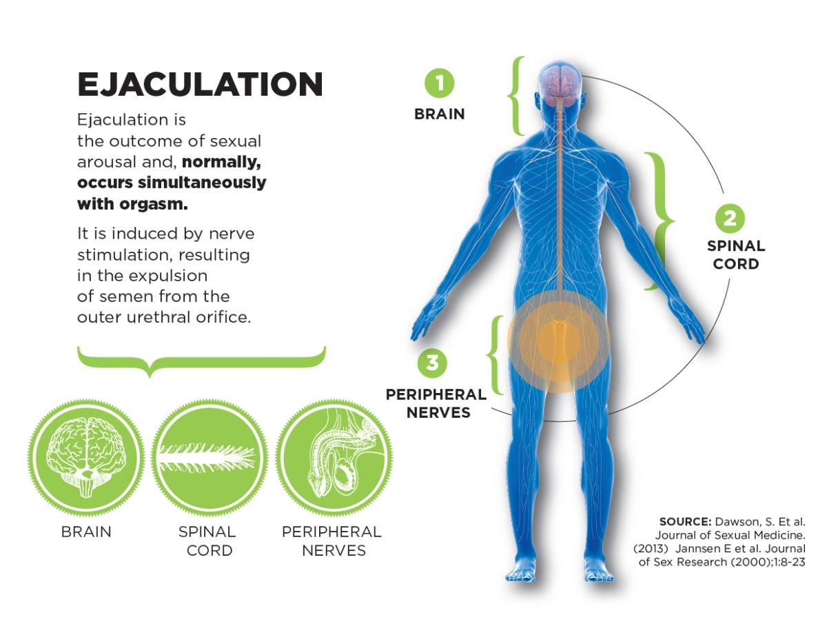 Причины и лечение преждевременной эякуляции у мужчин в домашних условиях