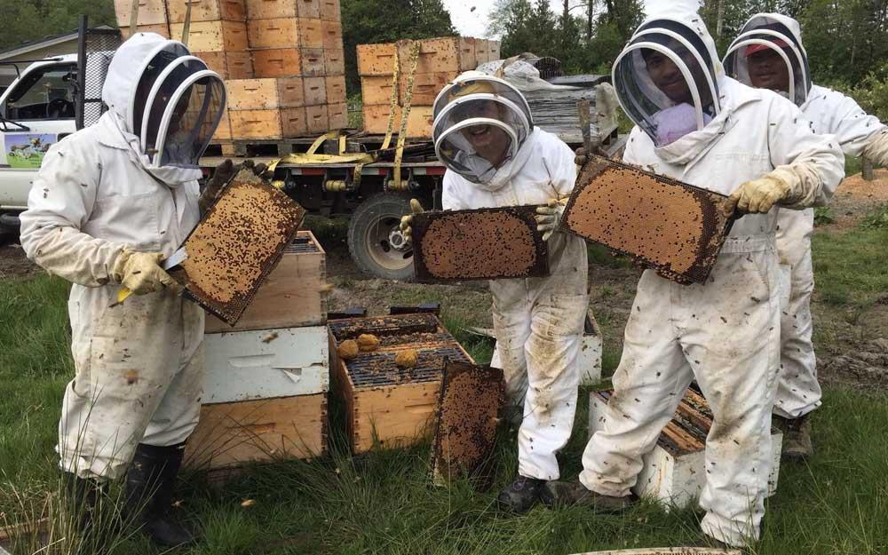 Продукты пчеловодства: полный перечень, применение, свойства