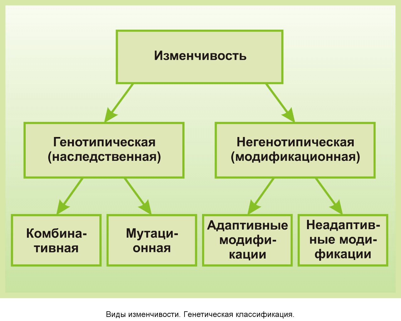 Изменчивость организмов