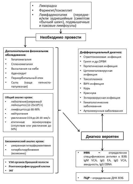 Острое респираторное заболевание: симптомы и лечение | справочник заболеваний helzy