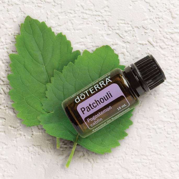 Пачули – состав и свойства дерева; польза масла и его применение в медицине и кулинарии; фото растения и цветов