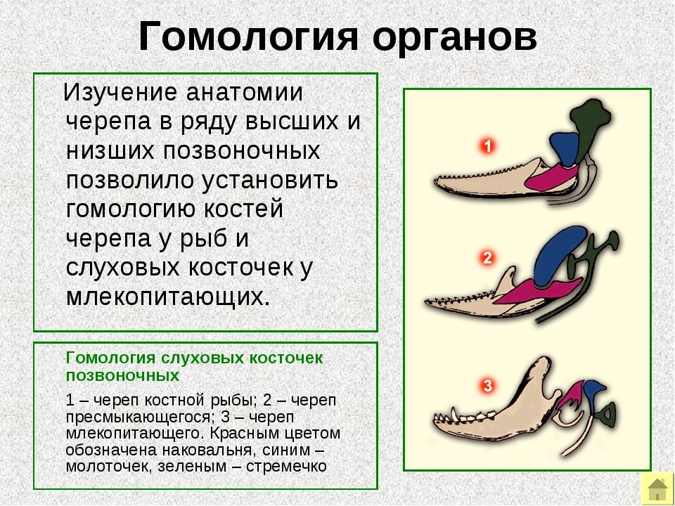 Гомологичные органы википедия