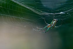 Паутина — википедия. что такое паутина