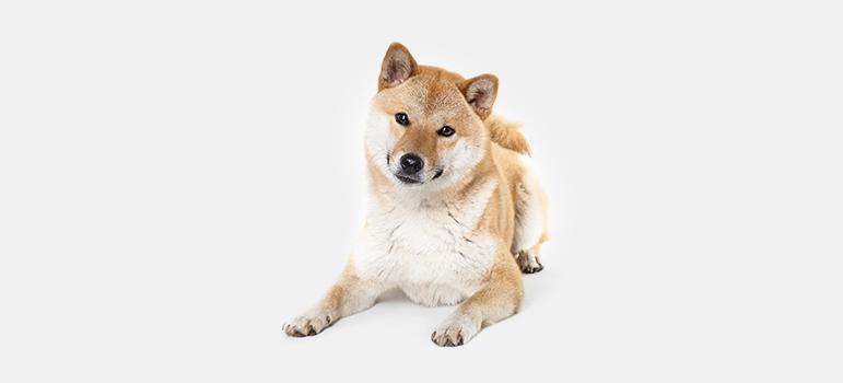 Как определить течку у собаки