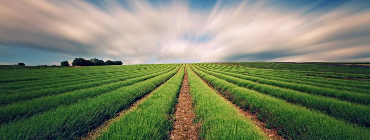 Присваивающее хозяйство - это что? присваивающее хозяйство: определение