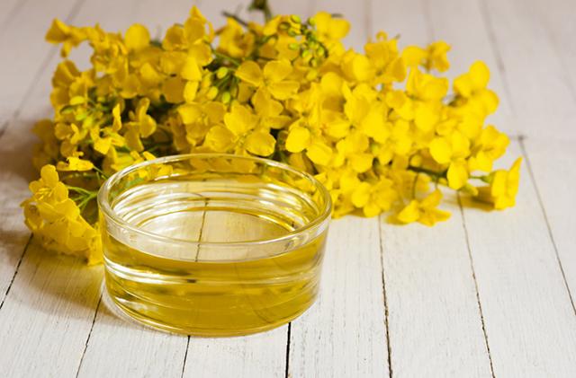 Рапсовое масло: вред и польза. свойства рапсового масла и его применение