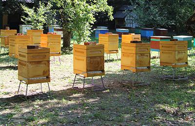 Разведение пчел в домашних условиях для начинающих пчеловодов
