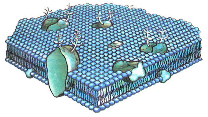 Что такое мембранный материал. виды мембран. их применение