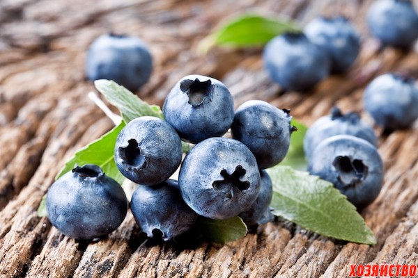 Ягода, генрих григорьевич — википедия. что такое ягода, генрих григорьевич