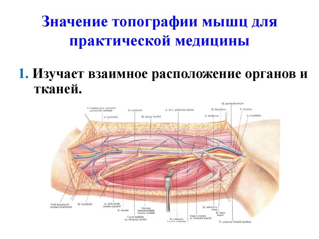 Топография — википедия. что такое топография