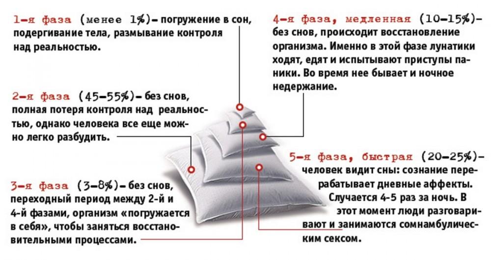 Почему снятся сны и стоит ли в них верить - hi-news.ru