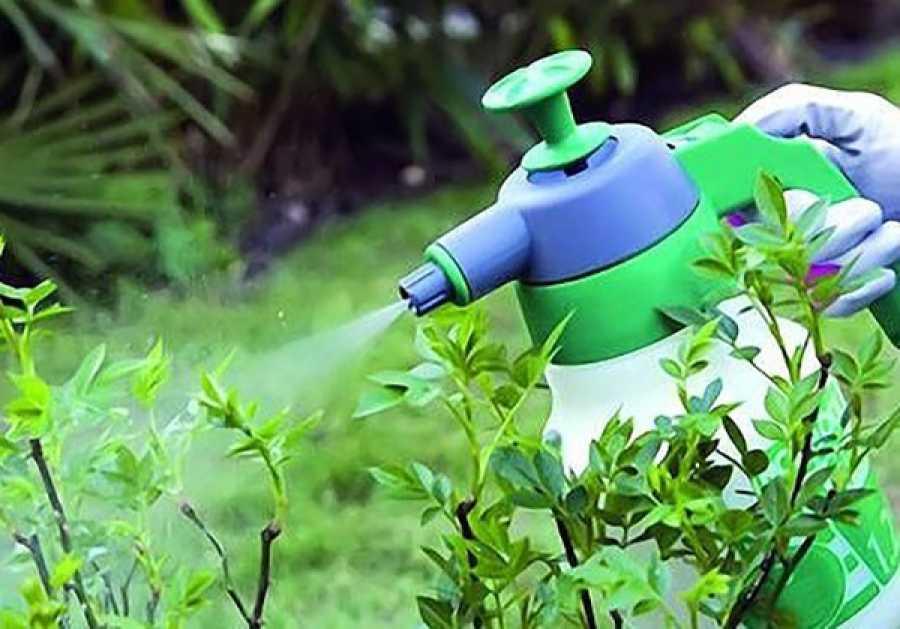 Что такое репелленты и как они помогут от клещей и комаров?