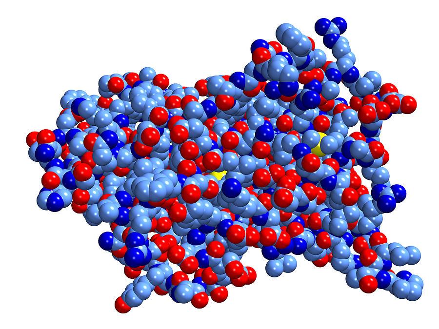 Что такое гормоны, какие бывают виды, таблица с функциями