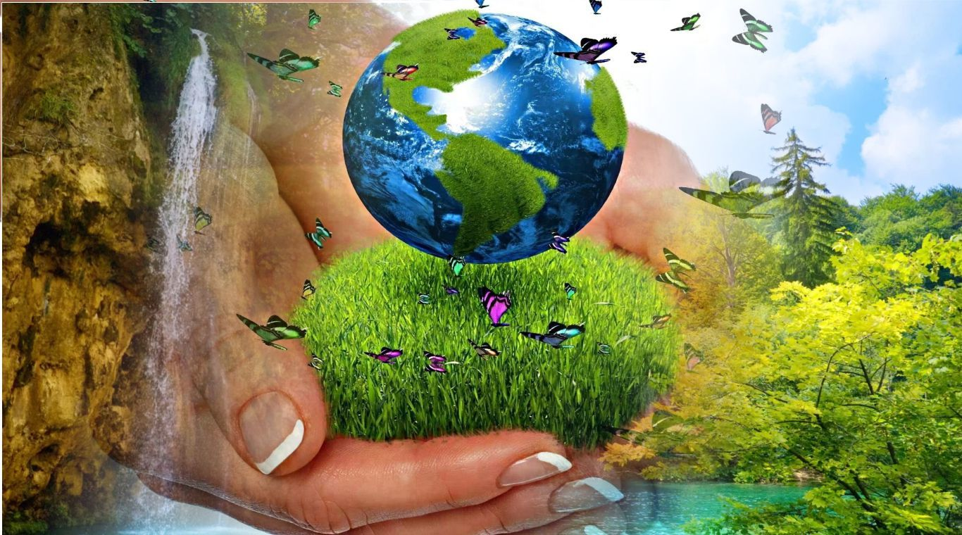 Биоразнообразие — википедия. что такое биоразнообразие