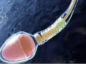 Что показывает анализ спермограммы: норма и отклонения