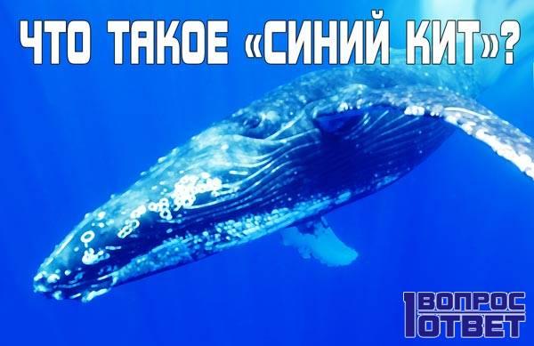 Синий кит, что это за игра | интересные новости