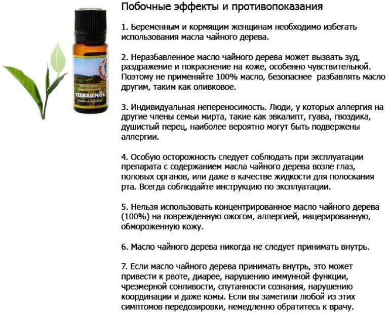 Масло жожоба: свойства и применение, польза и вред