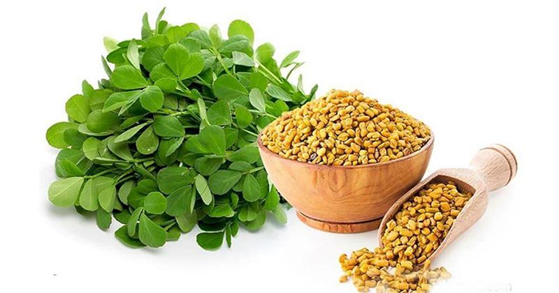Чай хельба египетский: полезные свойства и как пить