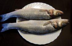 Сибас какая рыба красная или белая. кулинарная ценность рыбы сибас