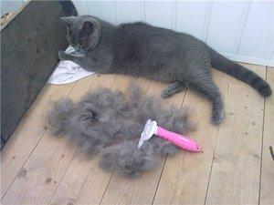 Расческа фурминатор для длинношерстных кошек, как правильно пользоваться и как выбрать