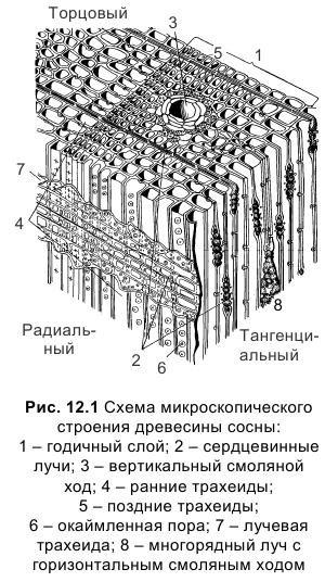 Что такое древесина?