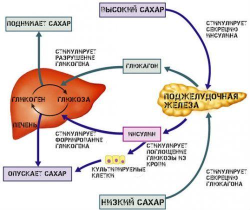 Гормон альдостерон: функции, норма, повышен, как снизить